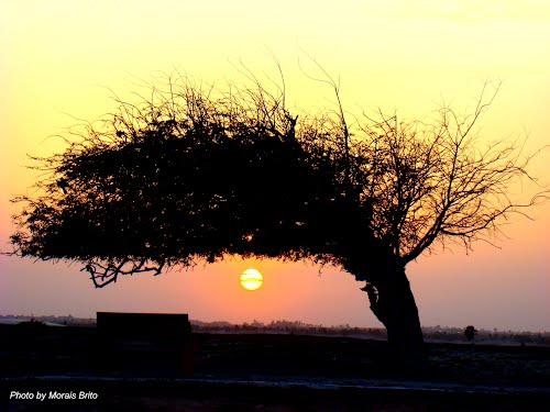 Árvore Penteada - Foto: Morais Brito